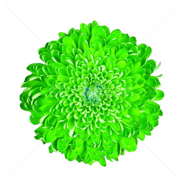 Groene chrysant geïsoleerd witte liefde gelukkig Stockfoto © michaklootwijk