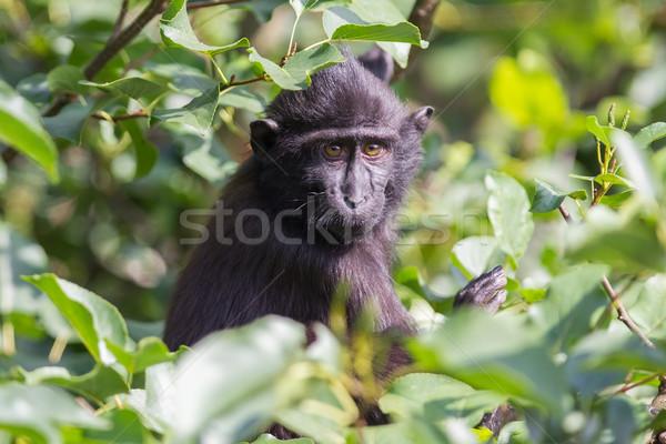Fiatal arc fa zöld portré fekete Stock fotó © michaklootwijk