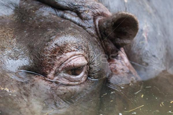 Shot occhi acqua viaggio animali Foto d'archivio © michaklootwijk