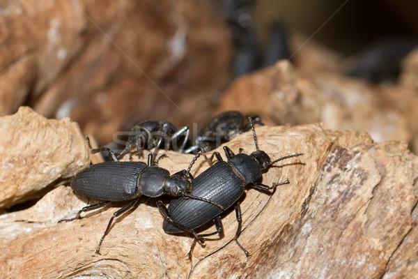 Groot zwarte stuk hout natuur kleur Stockfoto © michaklootwijk