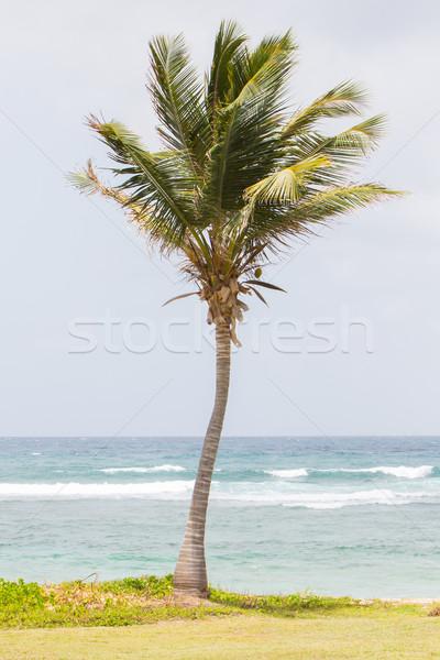 Stockfoto: Palmboom · strand · stoel · zwemmen · eiland · tropische