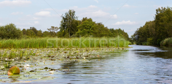 Typical view of a the swamp in National Park Weerribben  Stock photo © michaklootwijk