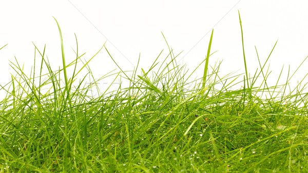 Close up of fresh thick grass with water drops Stock photo © michaklootwijk