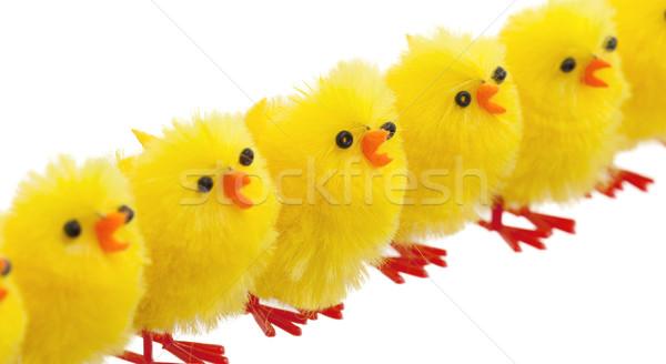Obfitość Wielkanoc pisklęta selektywne focus odizolowany baby Zdjęcia stock © michaklootwijk