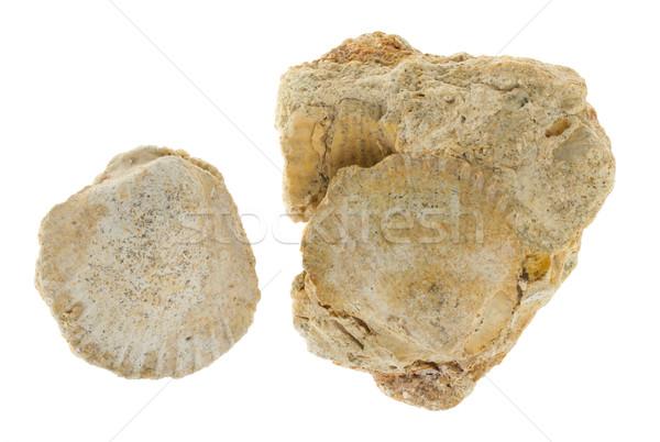 ストックフォト: 2 · 古い · テクスチャ · 白 · 海岸
