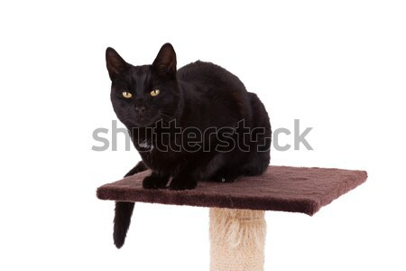 Black cat with a scratch pole  Stock photo © michaklootwijk
