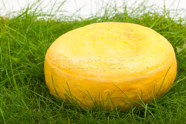 Round onion cheese isolated in the green grass Stock photo © michaklootwijk