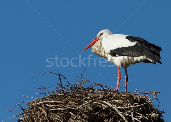 Stork in a tree Stock photo © michaklootwijk
