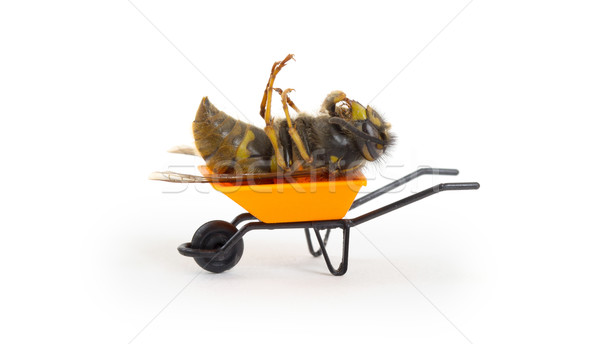 Dead wasp in a miniature wheelbarrow Stock photo © michaklootwijk