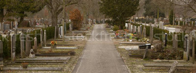 Nieuwe kerkhof holland boom natuur landschap Stockfoto © michaklootwijk