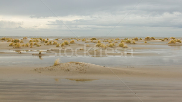 Low tide at the dunes of Ameland Stock photo © michaklootwijk