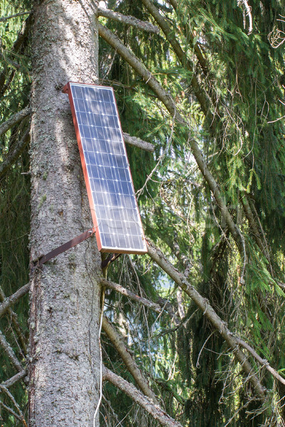 Solar panel attached to a large tree Stock photo © michaklootwijk