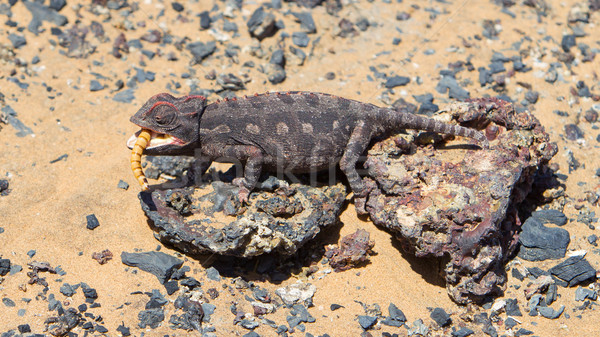 Vulkán vadászat sivatag Namíbia szemek háttér Stock fotó © michaklootwijk