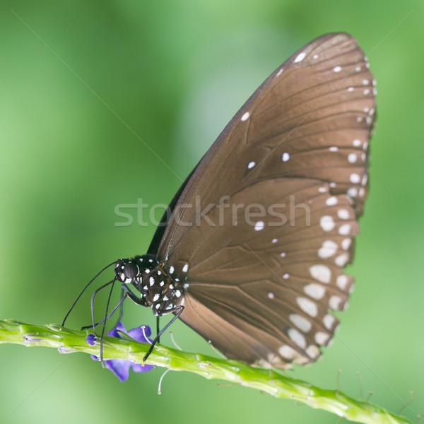Kelebek çekirdek seçici odak bahar Stok fotoğraf © michaklootwijk