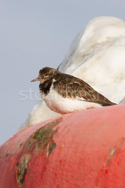 Közelkép hal tájkép hó madár piros Stock fotó © michaklootwijk