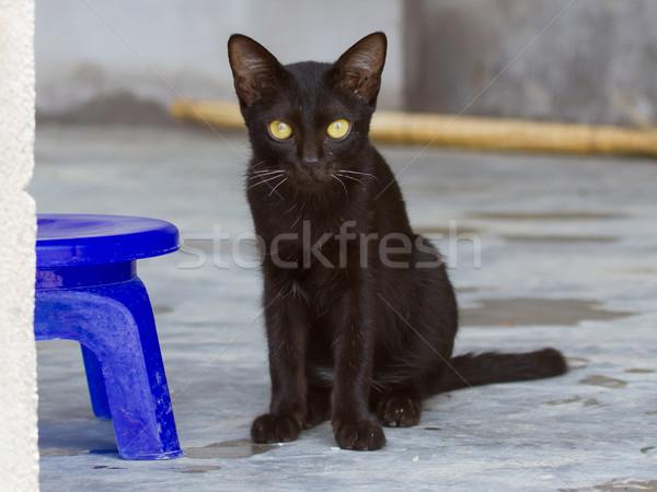 Black kitten outdoors on the concrete Stock photo © michaklootwijk