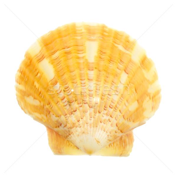 Petrified door ocean seashells Stock photo © michaklootwijk