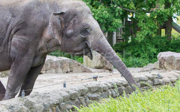 Elefante fresco verde jardim zoológico viajar Foto stock © michaklootwijk