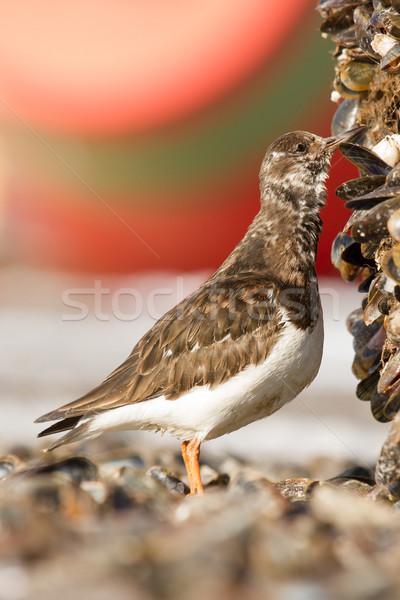 Primer plano peces aves invierno blanco almuerzo Foto stock © michaklootwijk