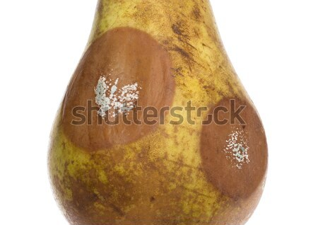Close up of a pear with white area of fungus growing on it, sele Stock photo © michaklootwijk
