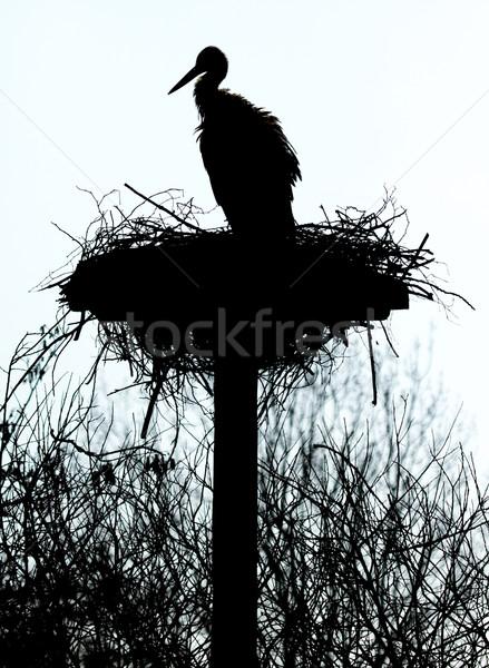 A stork on a nest Stock photo © michaklootwijk