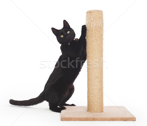 Stock photo: Black cat with a scratching post