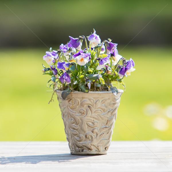 fleurs pot bois jardin table fleur photo stock micha klootwijk michaklootwijk. Black Bedroom Furniture Sets. Home Design Ideas