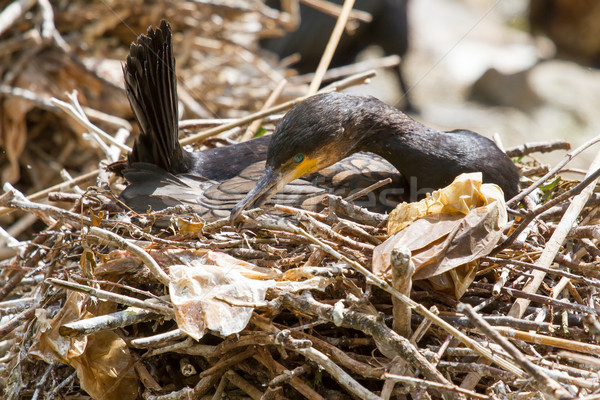 Naturale habitat zoo Holland cielo acqua Foto d'archivio © michaklootwijk