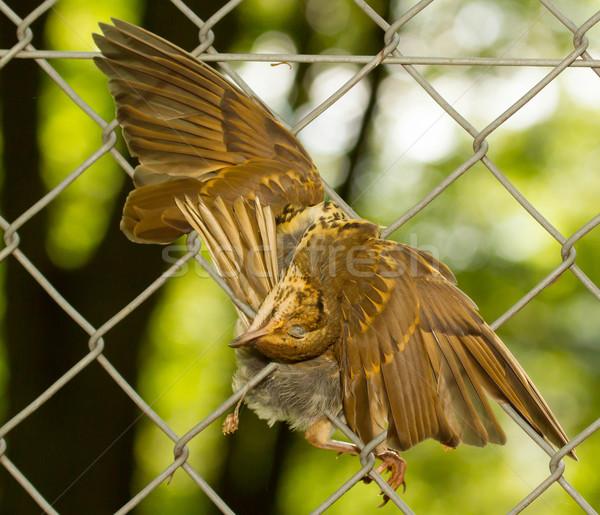 A dead bird Stock photo © michaklootwijk