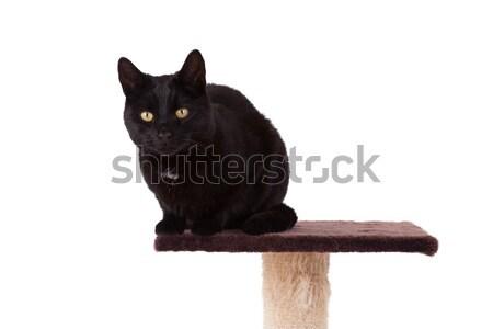 Neu Pol isoliert weiß Katze Stock foto © michaklootwijk
