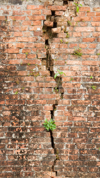Brick wall with a crack and plants Stock photo © michaklootwijk