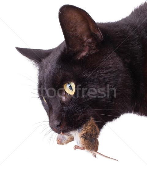 Preda morti mouse faccia Foto d'archivio © michaklootwijk