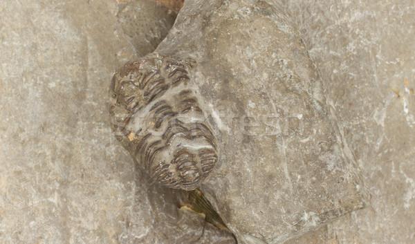 Fósil aislado piedra mar océano negro Foto stock © michaklootwijk