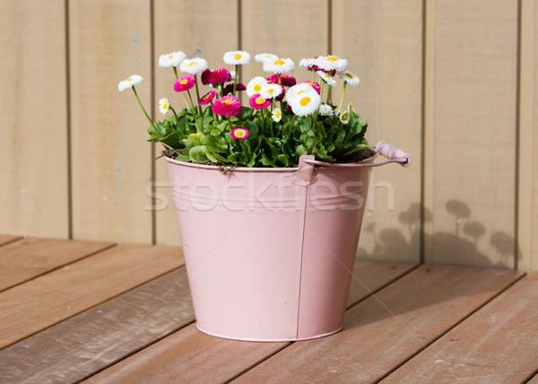 Bouquet of daisy flowers in a bucket Stock photo © michaklootwijk
