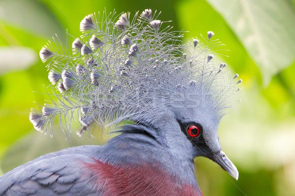 Vogel Kopf Profil Augen Krone tropischen Stock foto © michaklootwijk