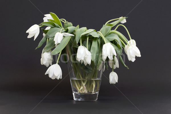Vase full of droopy and dead flowers Stock photo © michaklootwijk