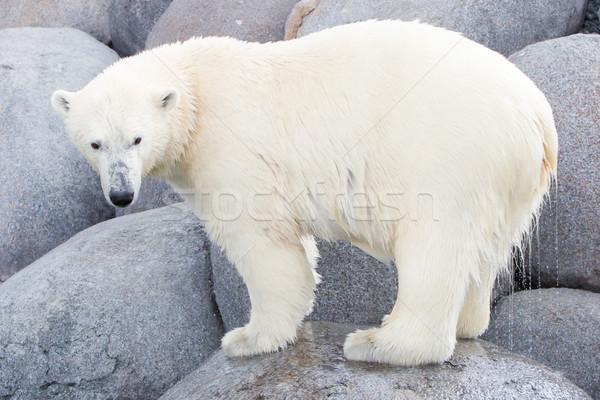 Su doğa deniz buz portre Stok fotoğraf © michaklootwijk