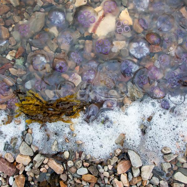 Small jellyfish washing up on a beach Stock photo © michaklootwijk