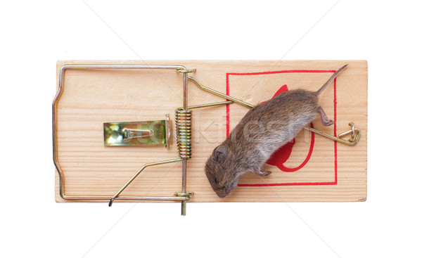 Stock photo: Mouse in a mousetrap