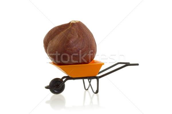 Oranje kruiwagen miniatuur hazelnoot geïsoleerd witte Stockfoto © michaklootwijk
