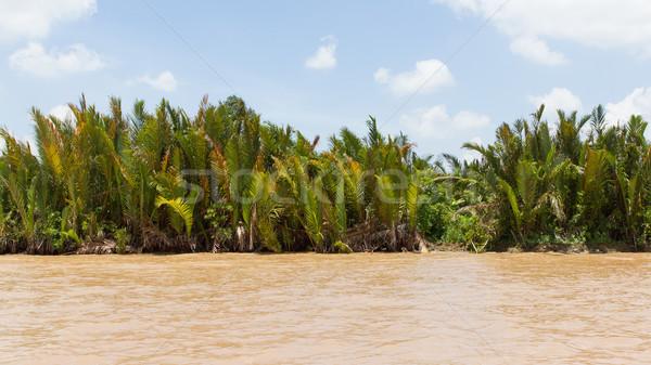 Pálmafák delta Vietnam tájkép szépség eső Stock fotó © michaklootwijk