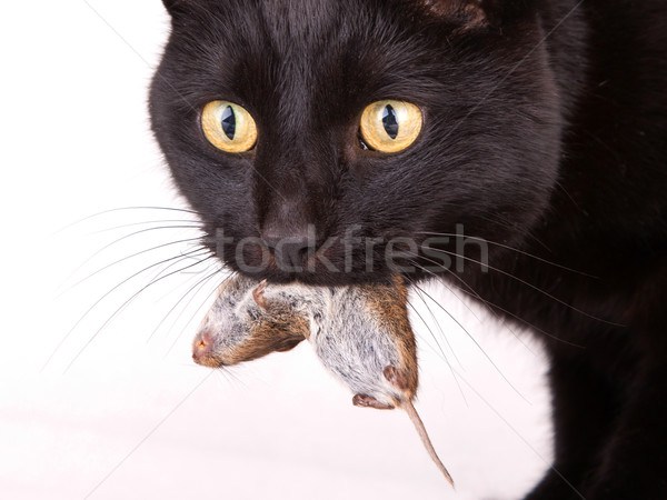 Morts souris visage Photo stock © michaklootwijk