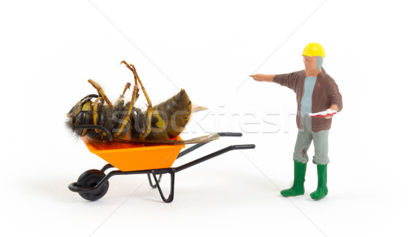 Dead wasp in a miniature wheelbarrow Stock photo © michaklootwijk