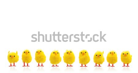 Abundance of easter chicks on a row Stock photo © michaklootwijk