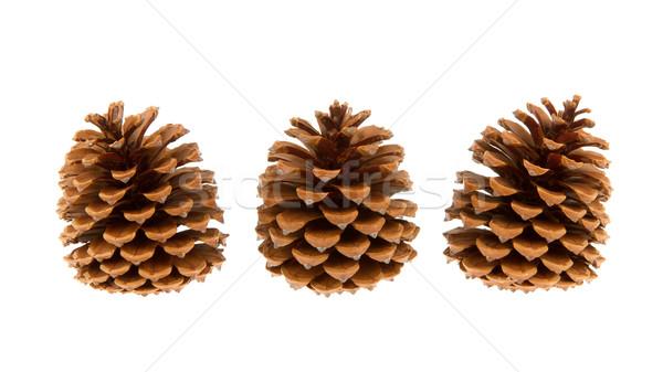 Stock photo: Three pine cones isolated