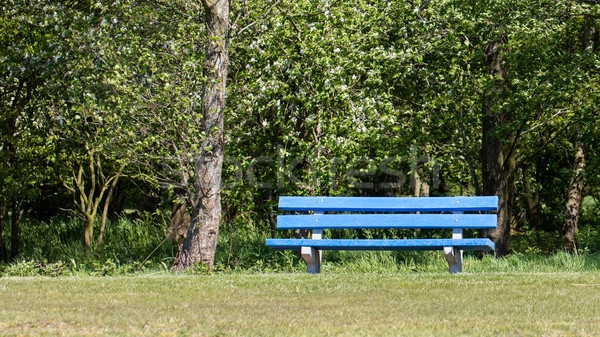 Blue bench in a public park Stock photo © michaklootwijk