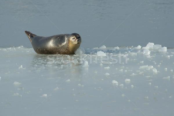 Selar praia água paisagem mar gelo Foto stock © michaklootwijk