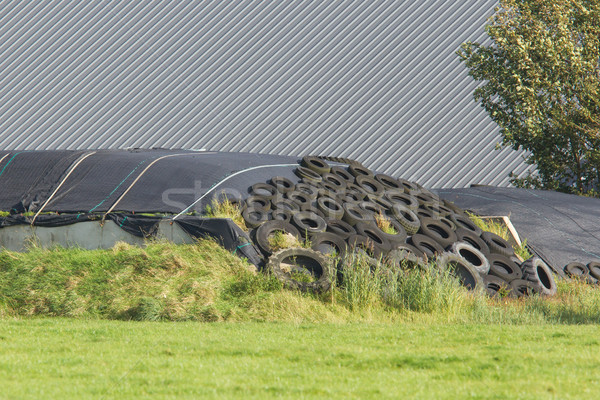 Haylage under plastic and car tires Stock photo © michaklootwijk