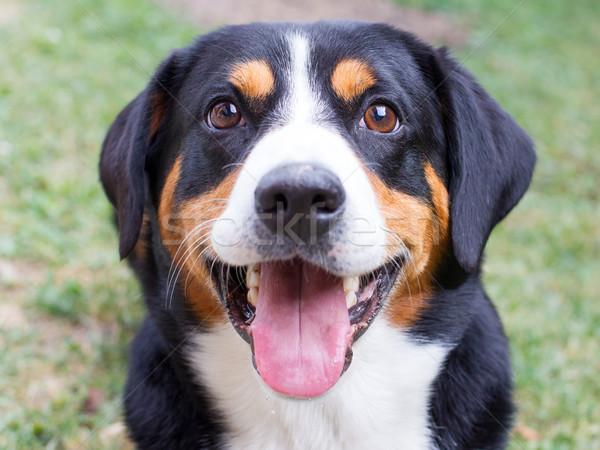 Jungen aussehen Augen Hund glücklich Stock foto © michaklootwijk