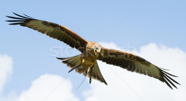 Urubu olho esportes natureza mundo Foto stock © michaklootwijk